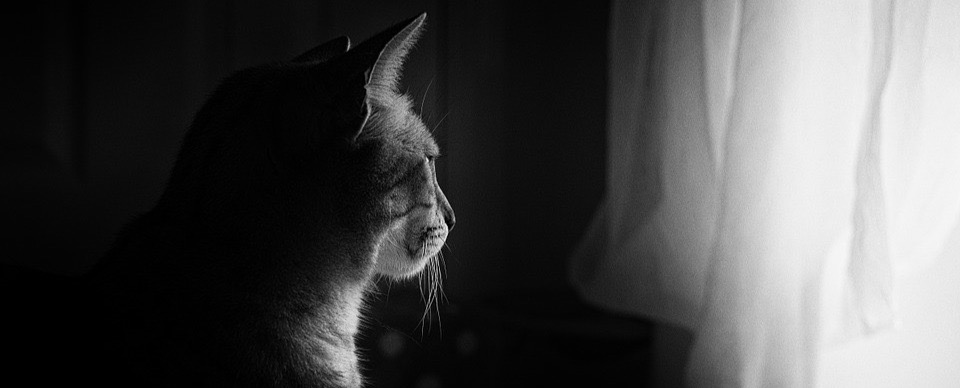 How Pets Affect the Suicide Loss Grief Journey